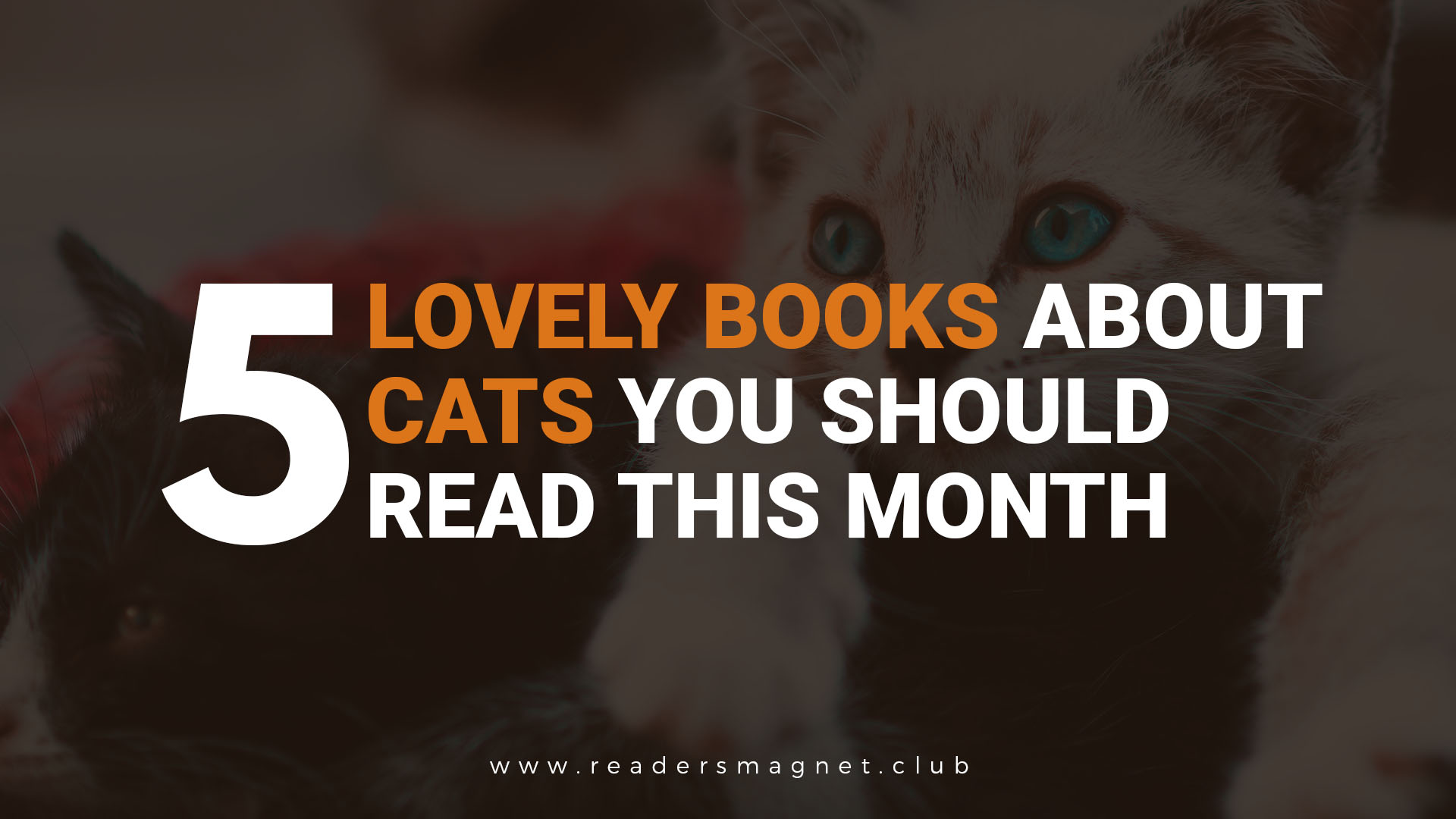 Five Lovely Books About Cats You Should Read This Month (1) banner