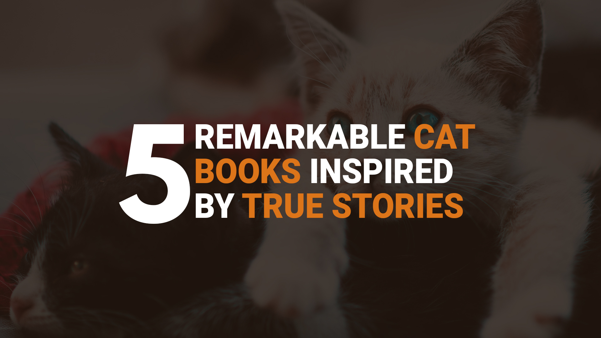 Remarkable Cat Books Inspired By True Stories banner
