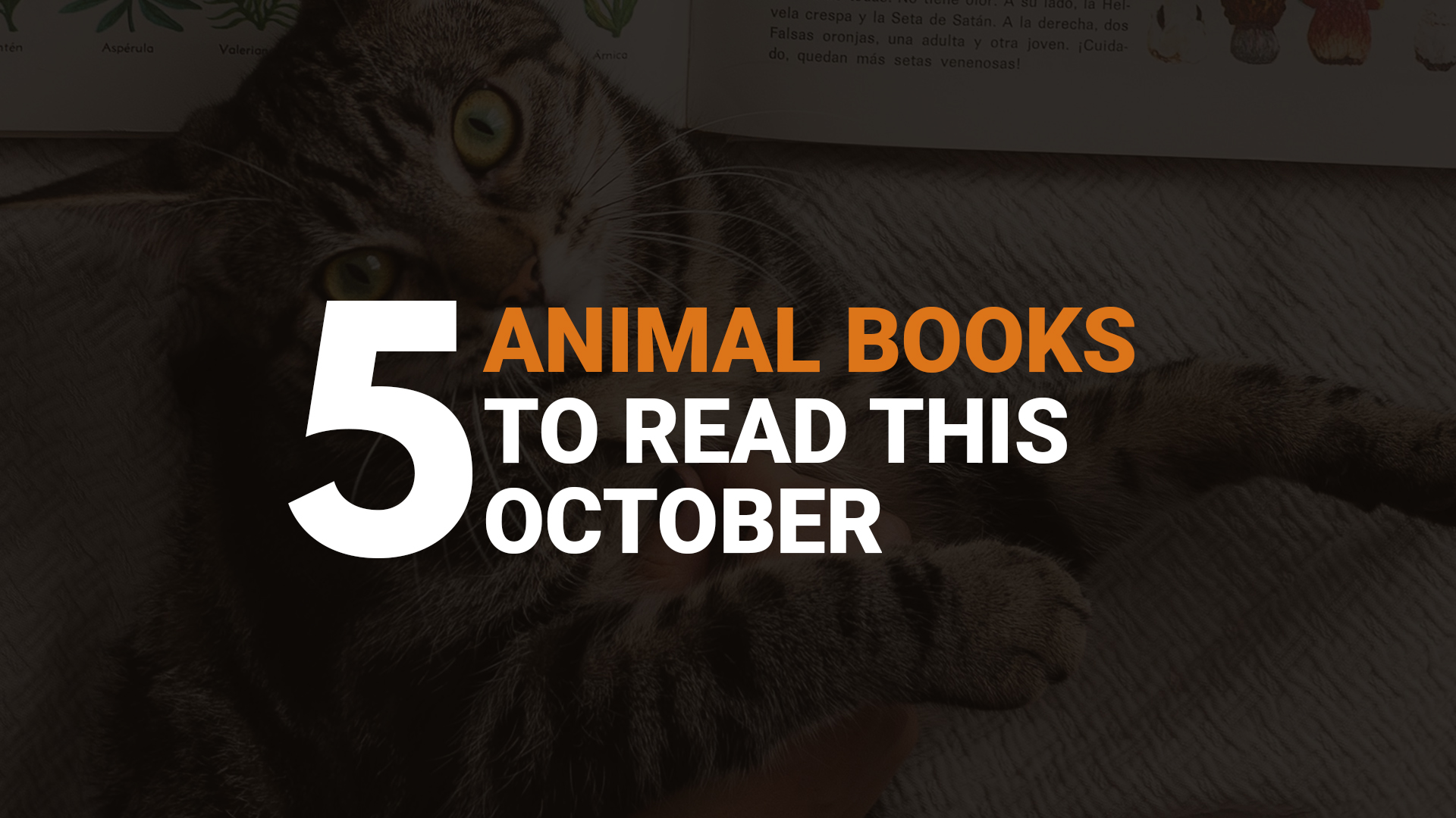 5 Animal Books to Read This October banner