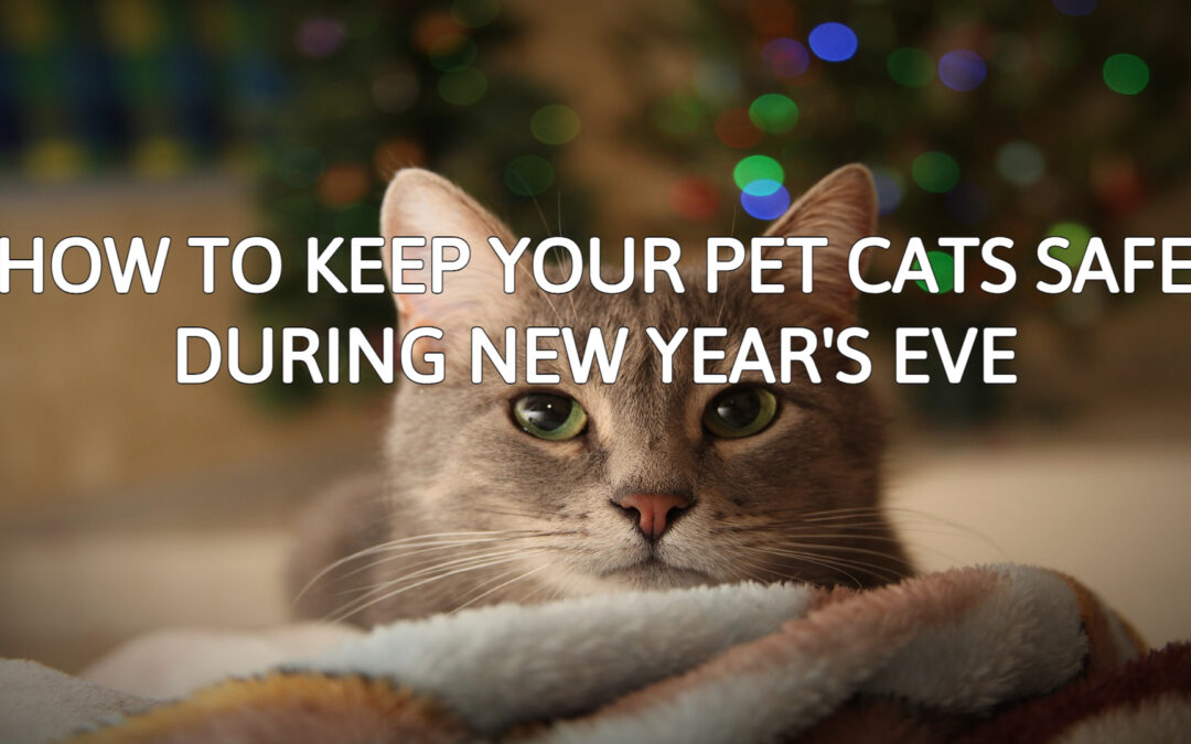 How to Keep Your Pet Cats Safe During New Year's Eve