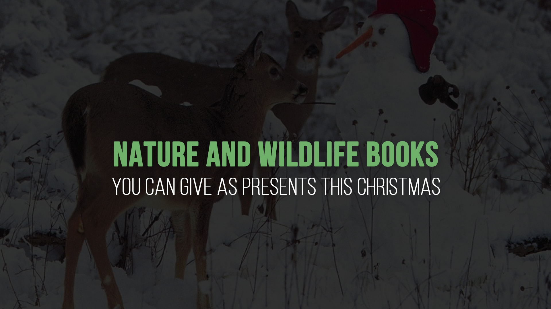 Nature and Wildlife Books You Can Give as Presents this Christmas banner