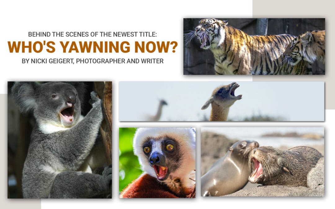 BEHIND THE SCENES OF THE NEWEST TITLE: WHO'S YAWNING NOW? BY NICKI GEIGERT, PHOTOGRAPHER AND WRITER