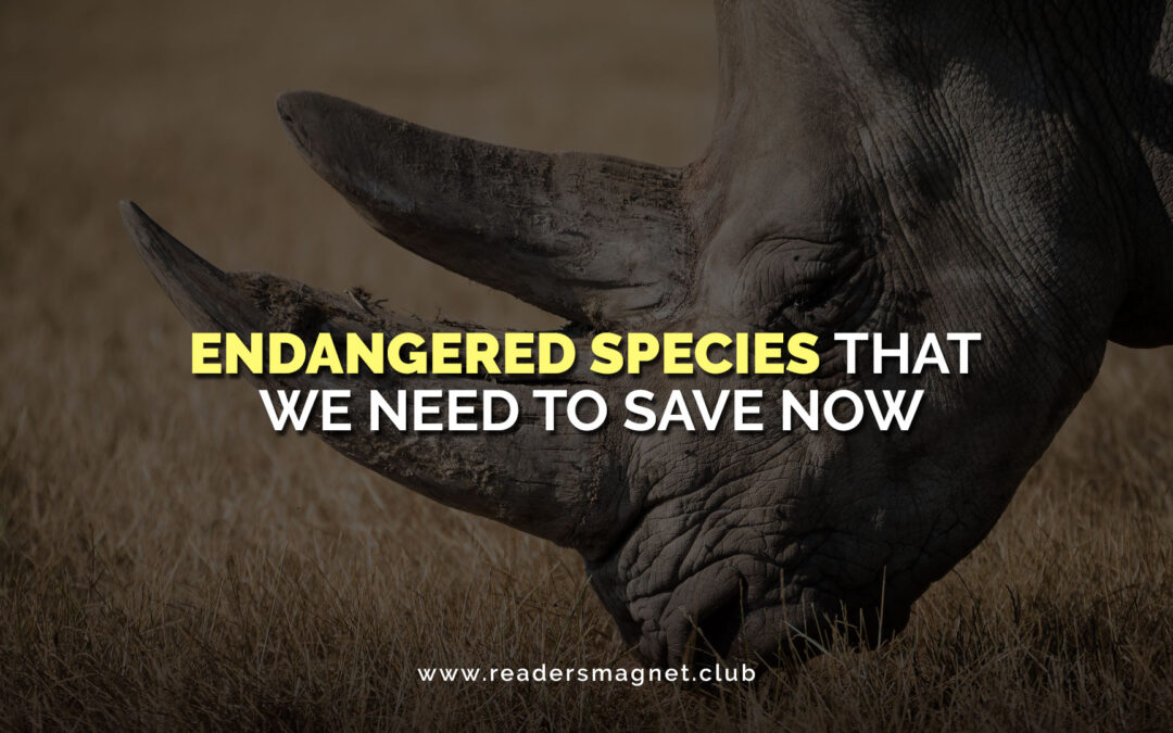 Endangered Species That We Need to Save Now