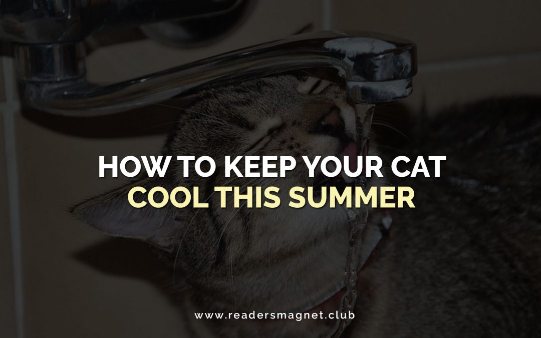 How to Keep Your Cat Cool This Summer